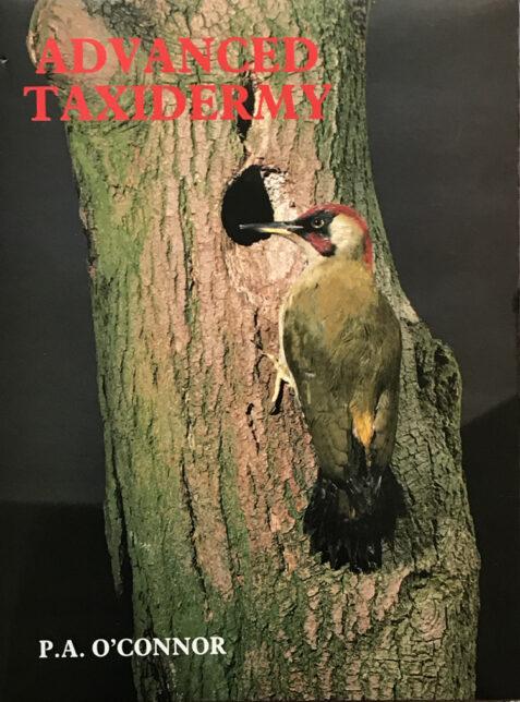 Advanced Taxidermy By P. A. O'Connor
